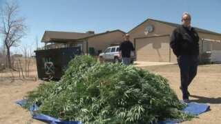 News 5 Investigates: Busting Black Market Marijuana