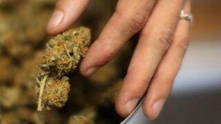 Does medical marijuana reduce painkiller overdose deaths?