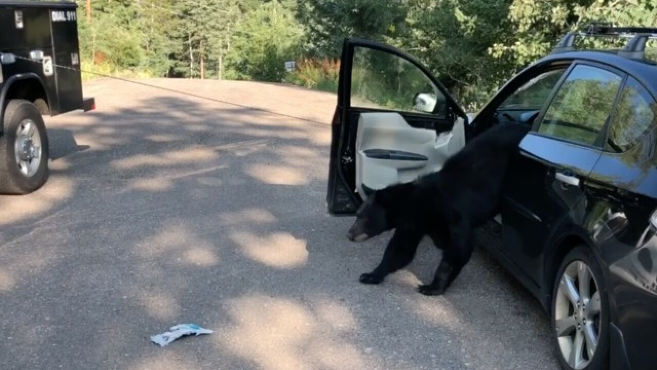 VIDEO: Deputies remove bear from car in Conifer