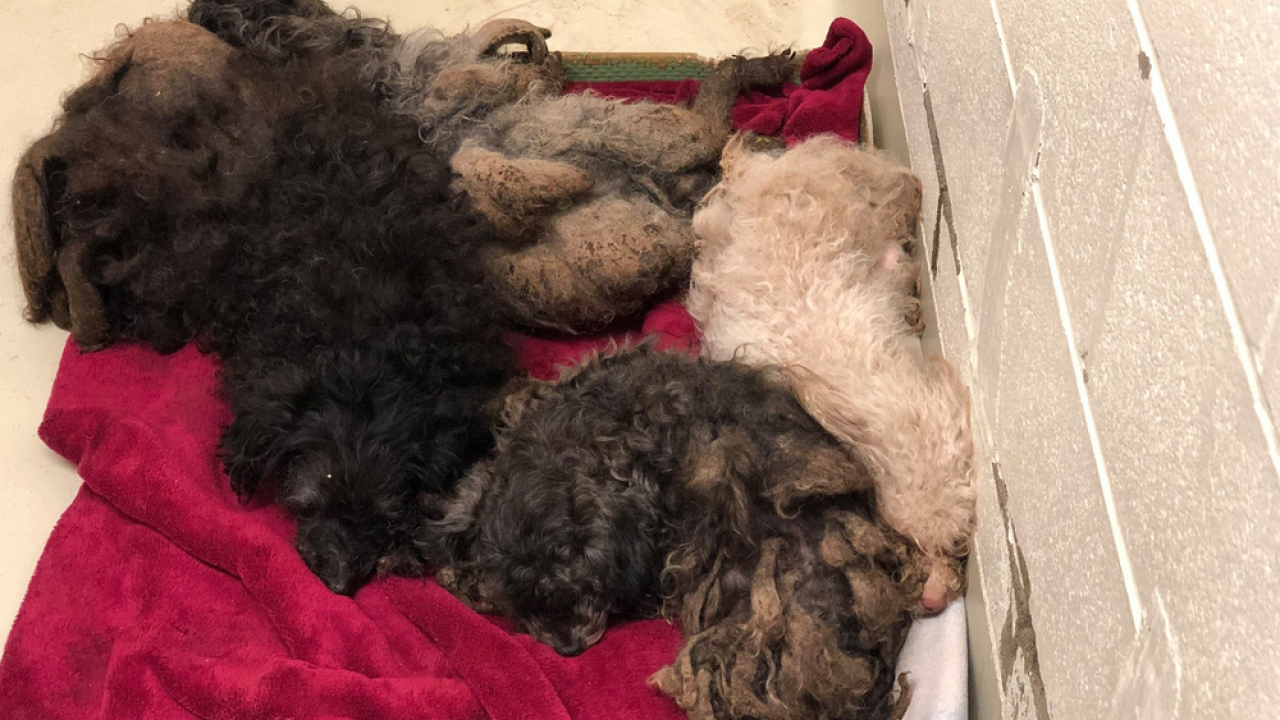 WCPO rescued warren county dogs.png
