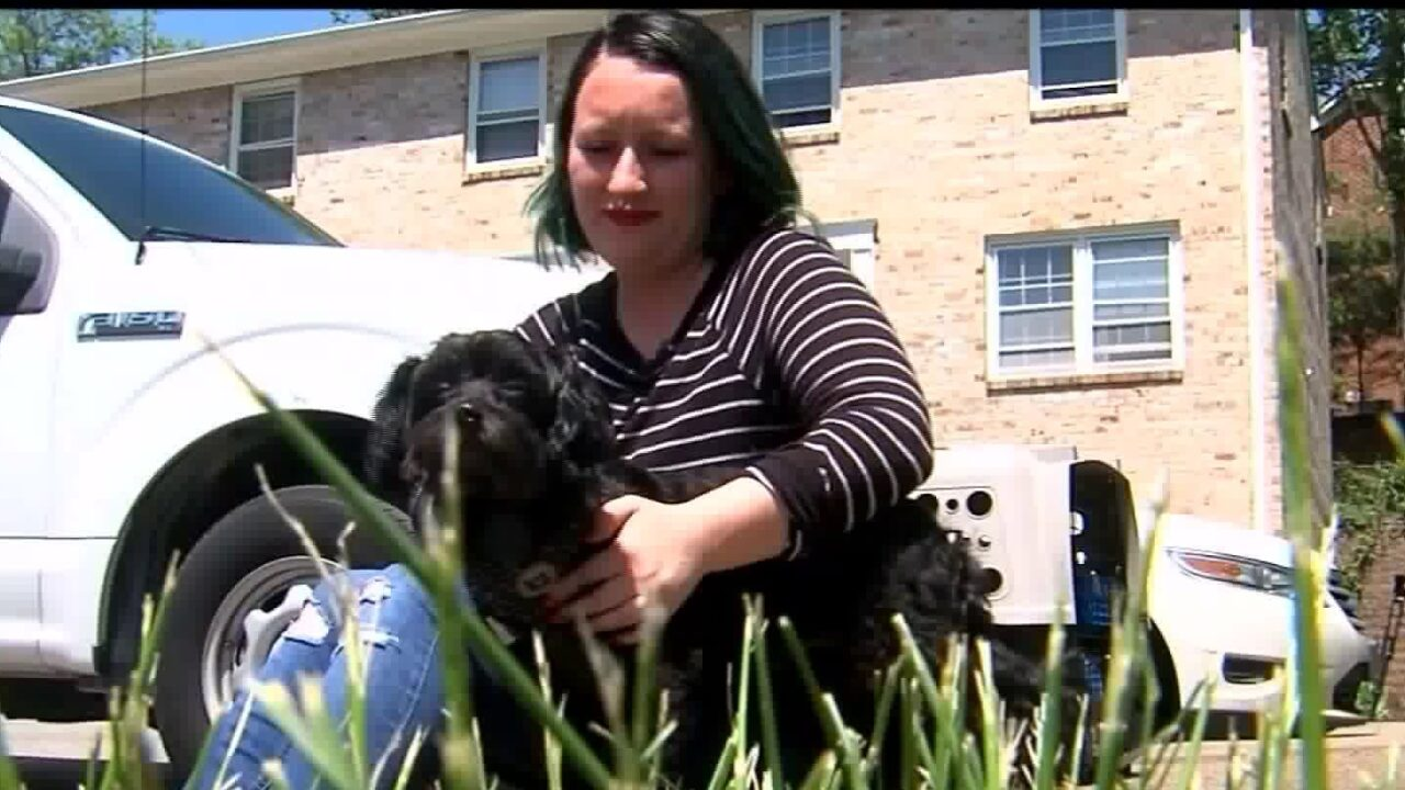 Woman reunites with her dog in Virginia after airline puts him on wrongflight