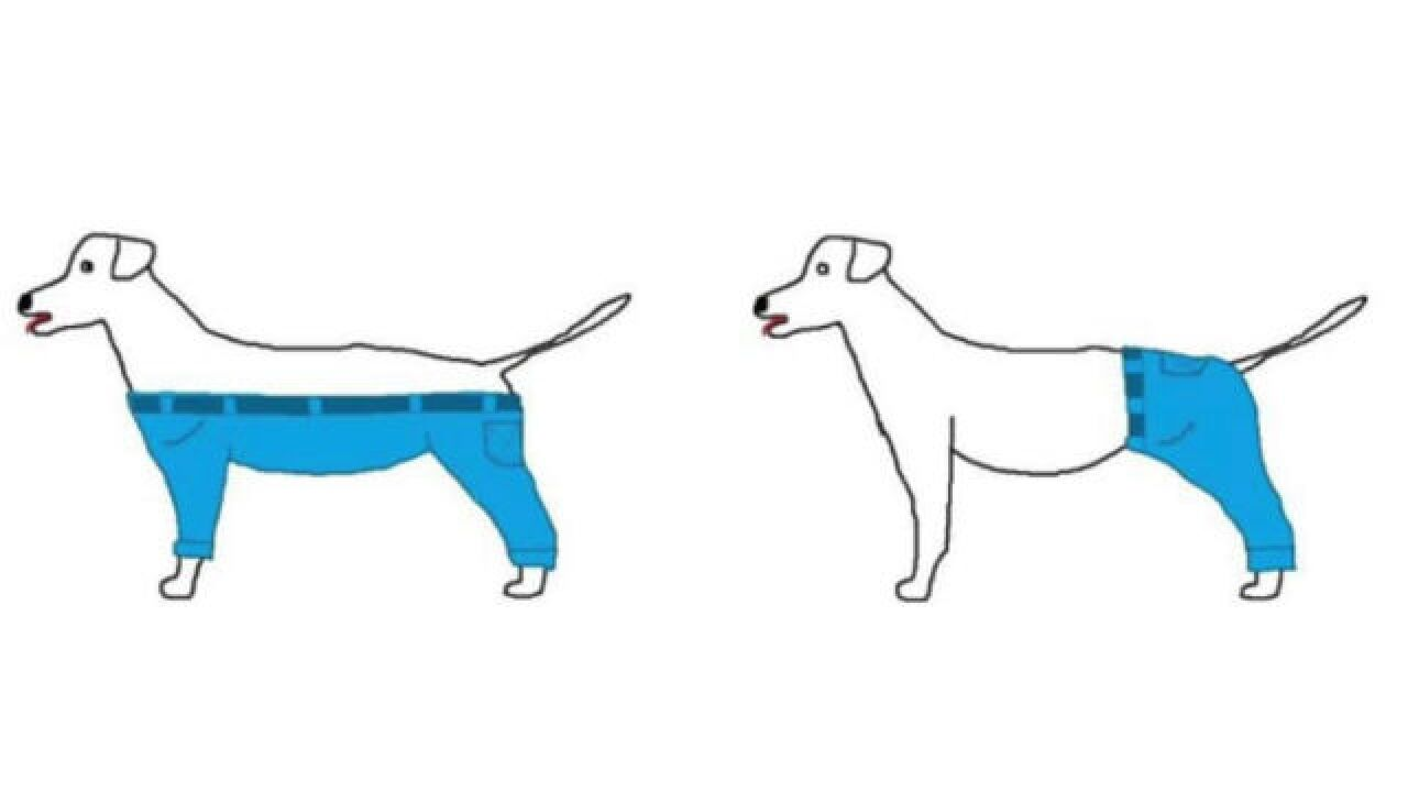 POLL: How would a dog wear pants?