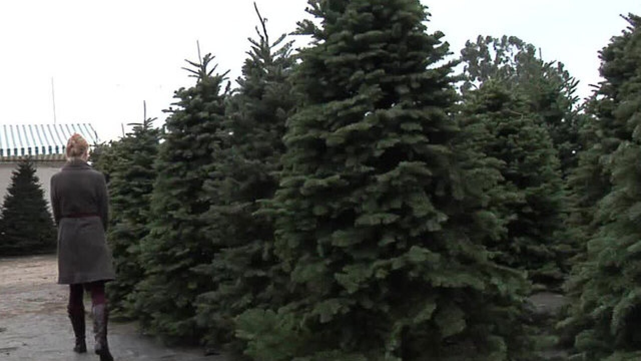 Amazon will sell & ship full-size, real Christmas trees this year