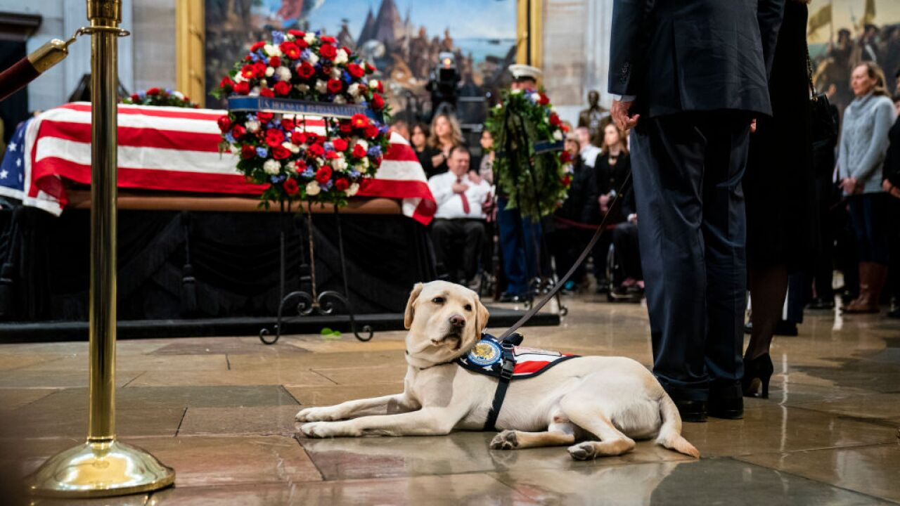Sully, President George H.W. Bush's former service dog, is now befriending vets with disabilities