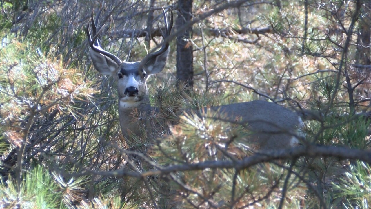 Chronic wasting disease numbers in Montana