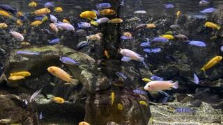 Aquarium of Niagara brings back 716 days