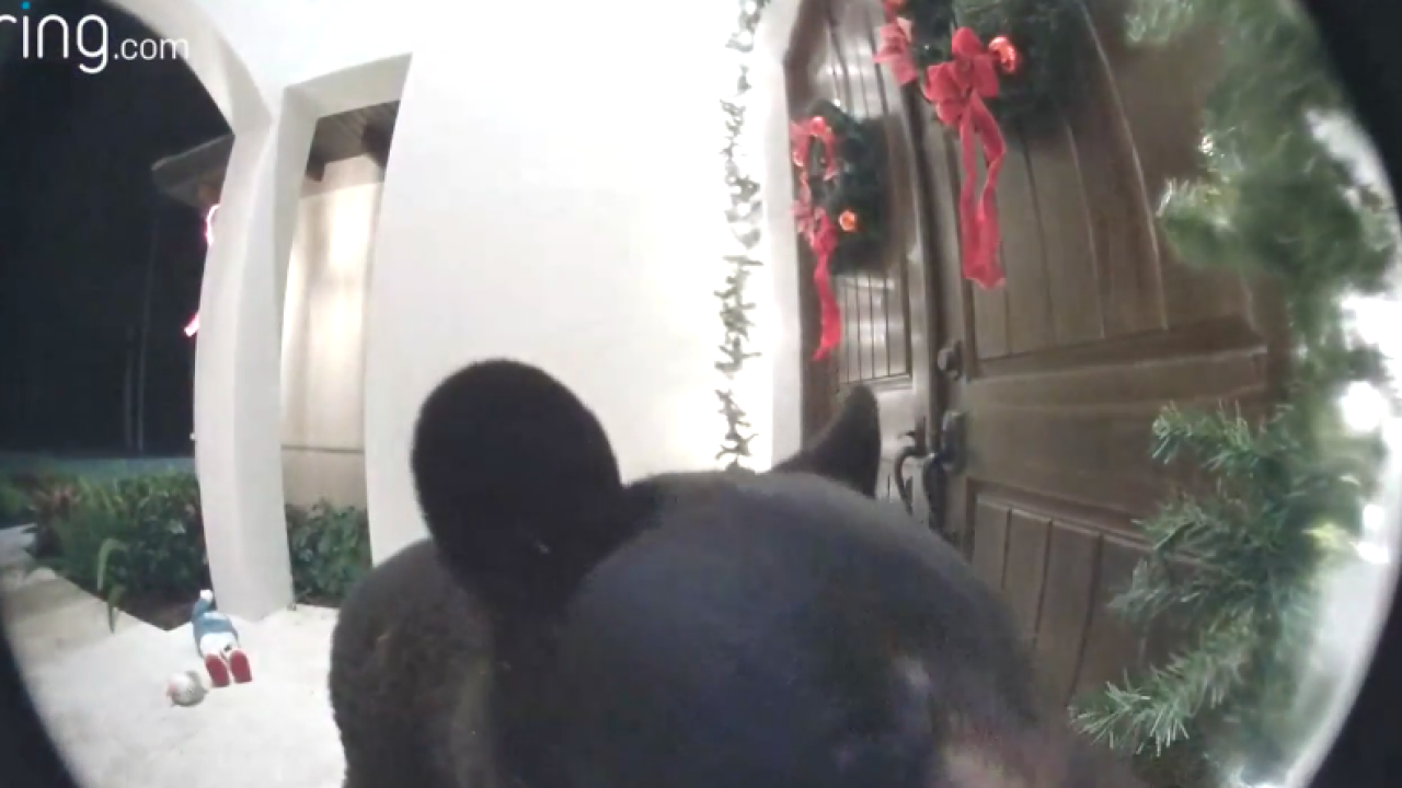 Bear rings doorbell in Florida