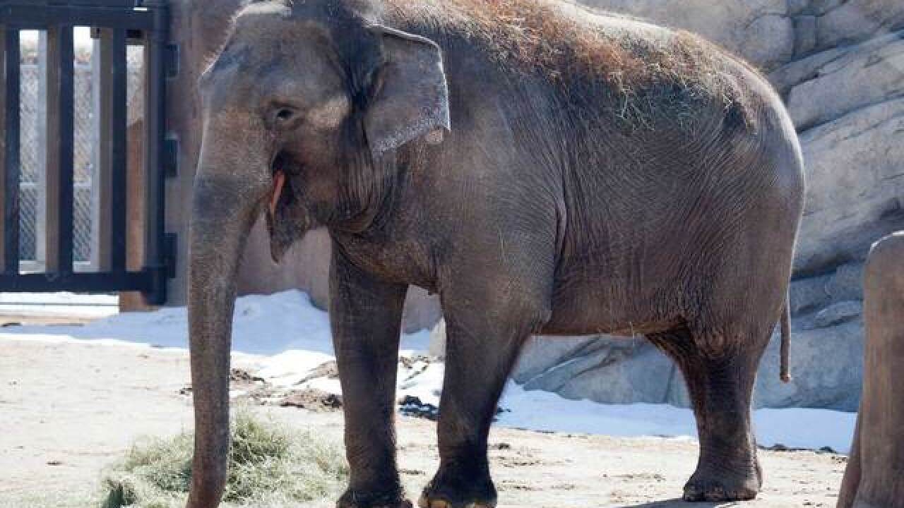 Denver Zoo elephant Dolly put on 'Hospice' care