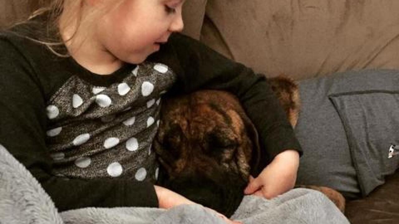 Dog who was found injured finds new family