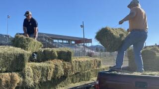 Horse Hay Donation