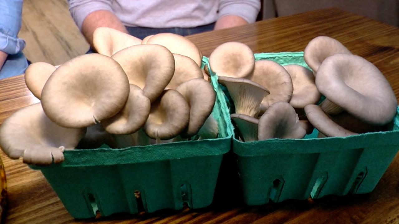 Mayshrooms mushrooms