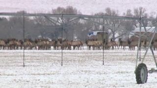 A Wilder View: A look at the elk rut season
