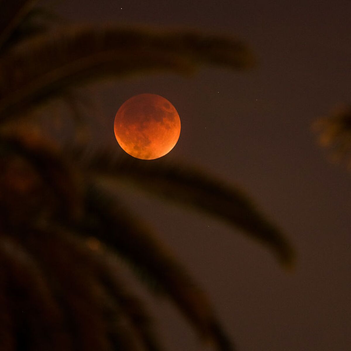wolf blood moon january 2019 florida - photo #17