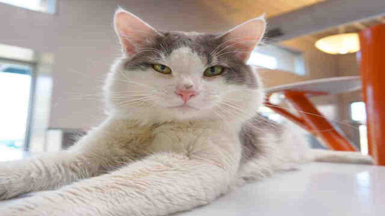 70 adorable cats up for adoption in Denver area
