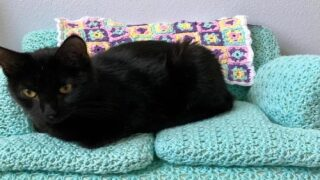 You Can Crochet A Tiny Couch For Your Cat