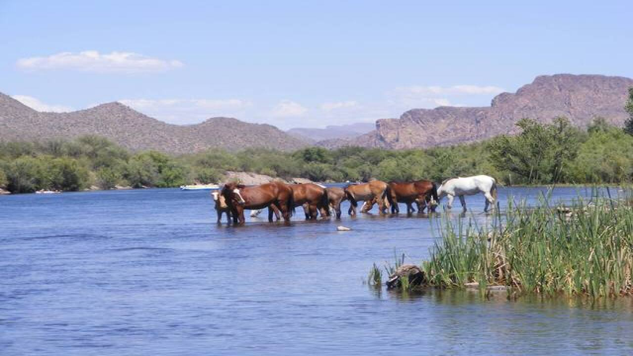 SHH! 6 secrets about Salt River Wild Horses
