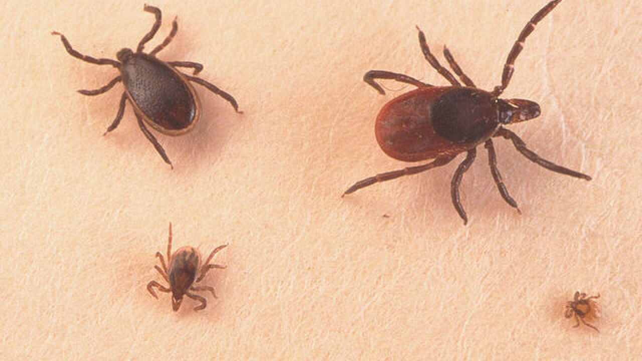 Doctors predict Lyme Disease epidemic this year
