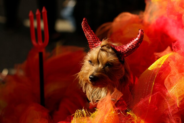 Tompkins Square Halloween Dog Parade in New York City