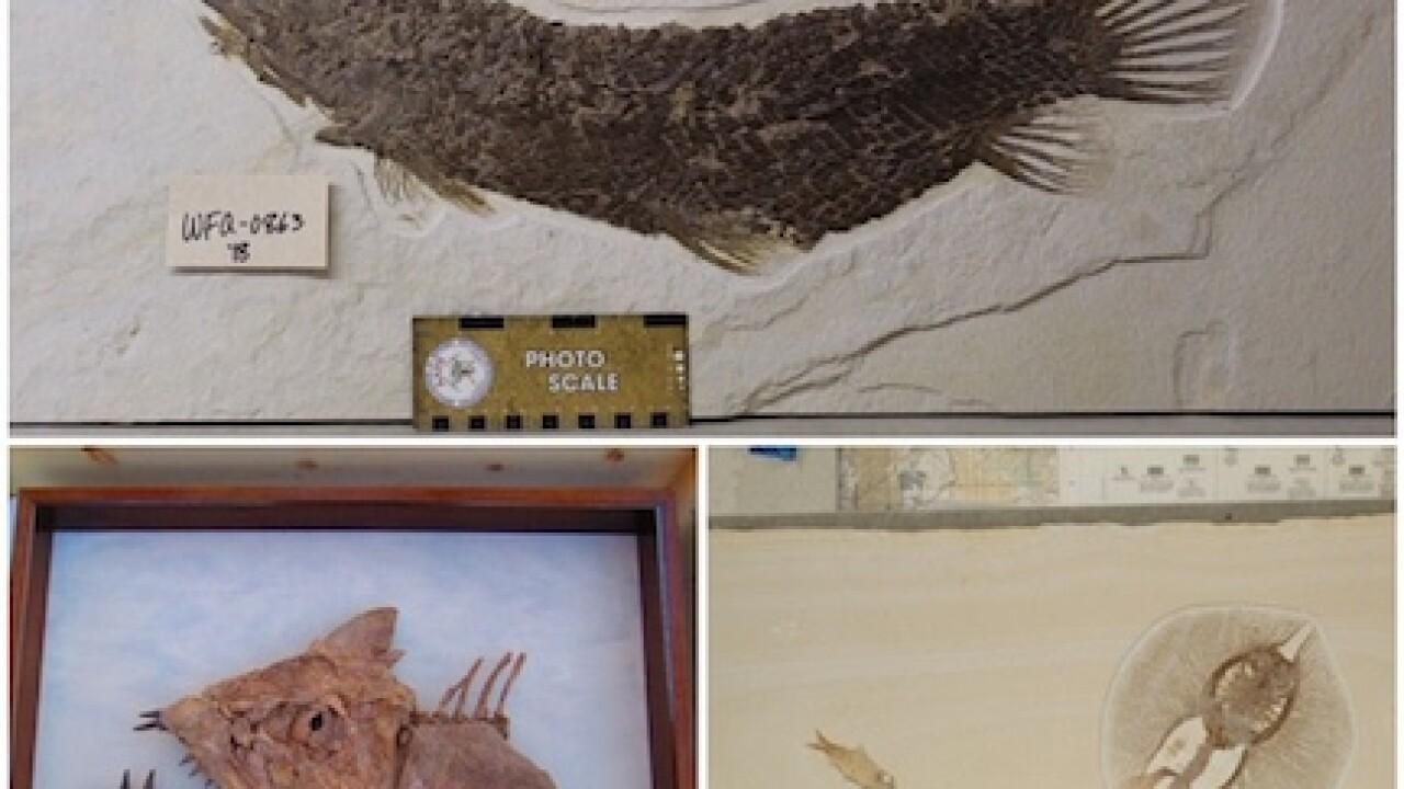 Stolen fossils
