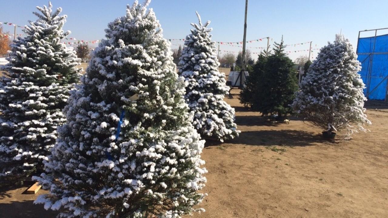 Christmas Tree Shortage.Experts Predict Christmas Tree Shortage This Holiday Season