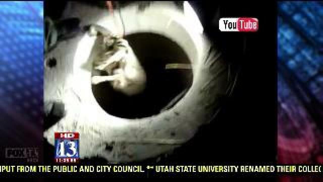 Deer rescued from Davis County manhole