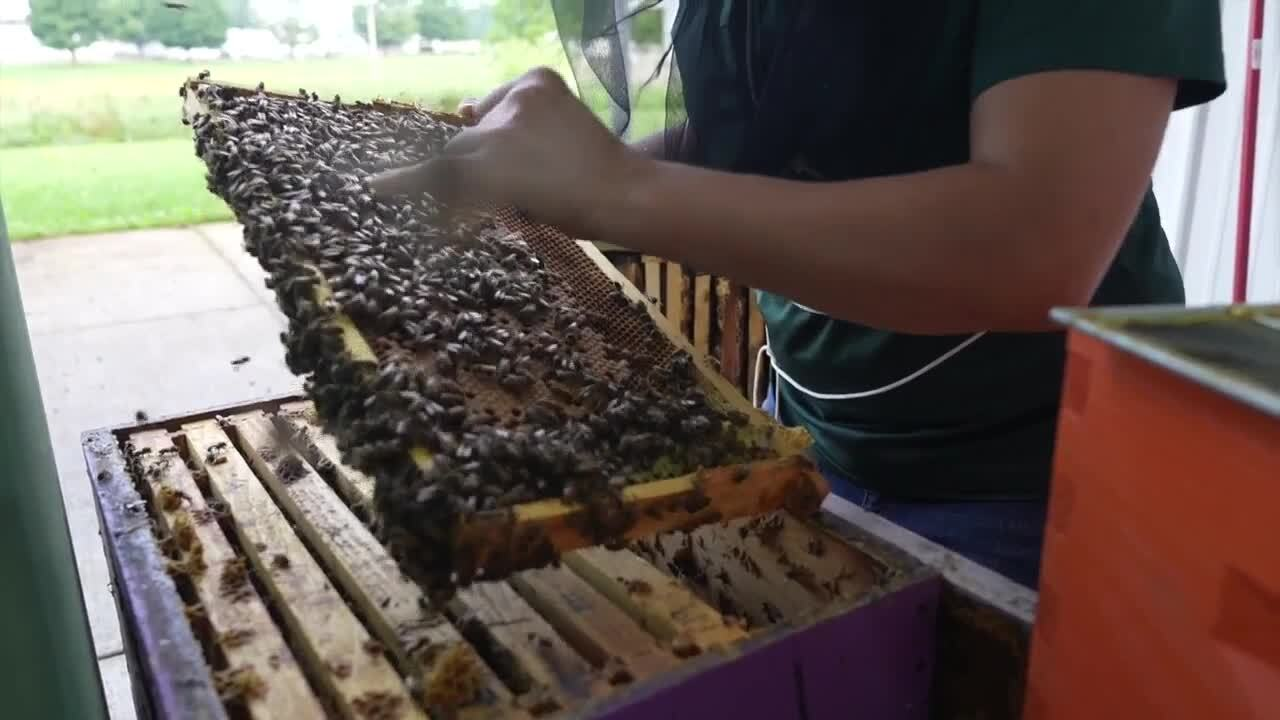 Honey is only one thing you should think about when it comes to bees