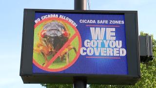 Cicada Free Zone sign