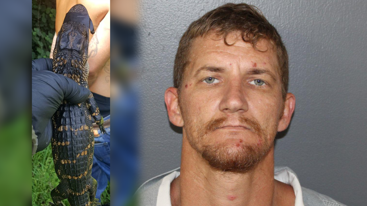 Florida man found with live alligator during traffic stop, deputies say