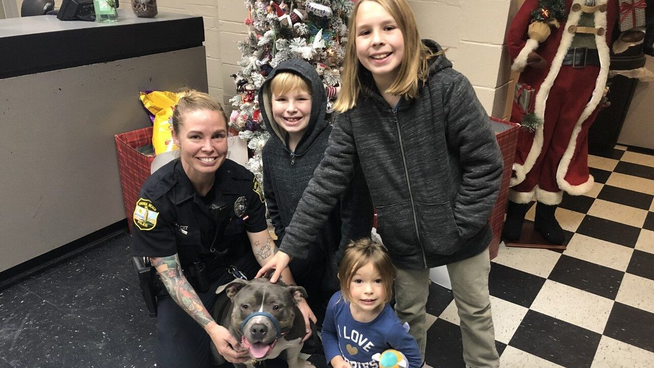 'It's like an early Christmas present' Norfolk family reunited with missing dog 'Turkey'
