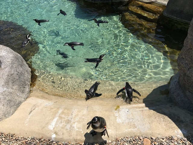 San Diego Zoo opens phase one of Africa Rocks exhibit