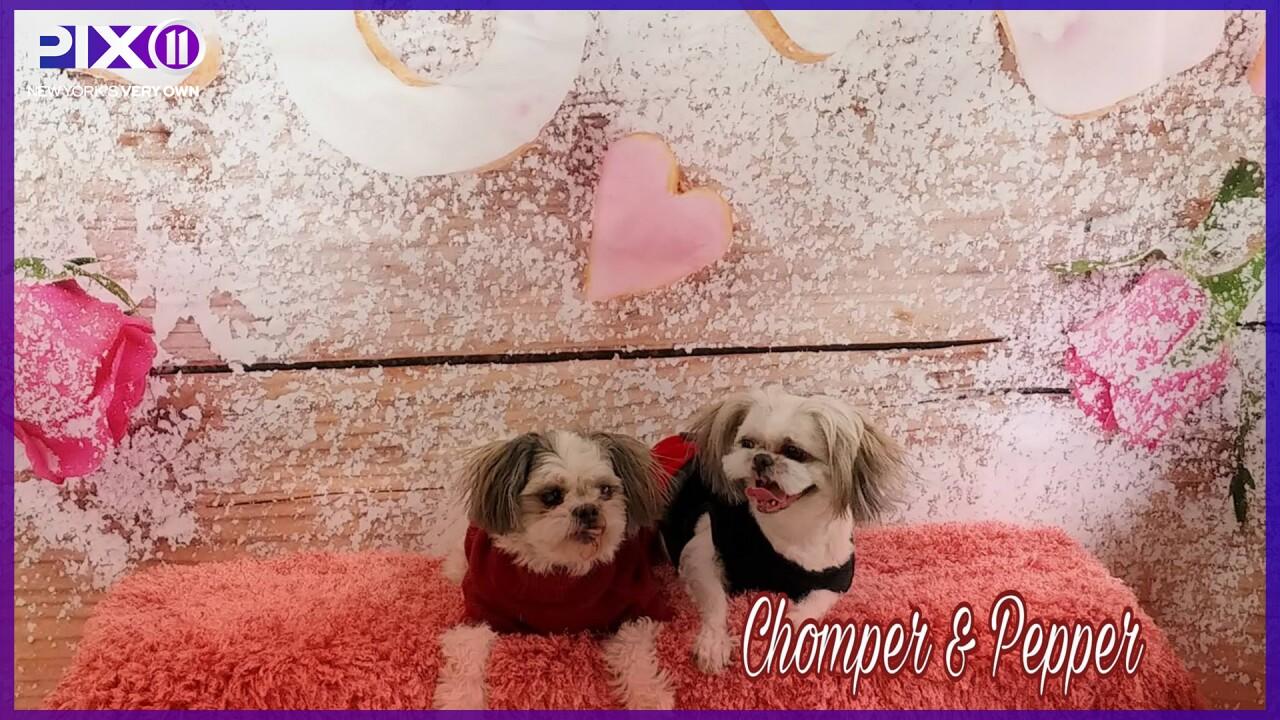 Vinny's Pet Shop pups