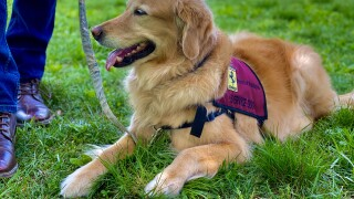 Service dogs save veterans lives through paws4vets.jpg