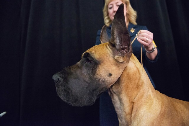 Top 8 Denver dog breeds and what they looked like as pups