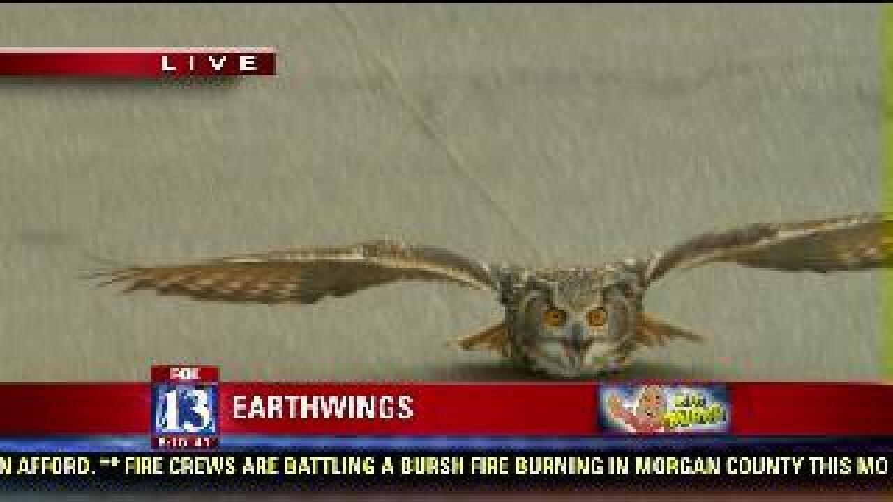 Catching an owl in action