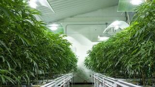 Ohio won't hit Sept. 8 deadline for medical marijuana, state says