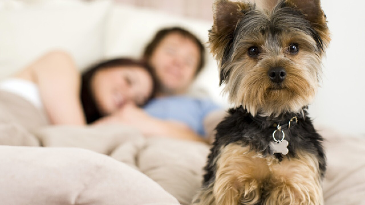 3 money questions to ask before getting a pet