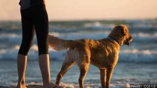 Get your pet vaccinated for as little as $10 this Saturday