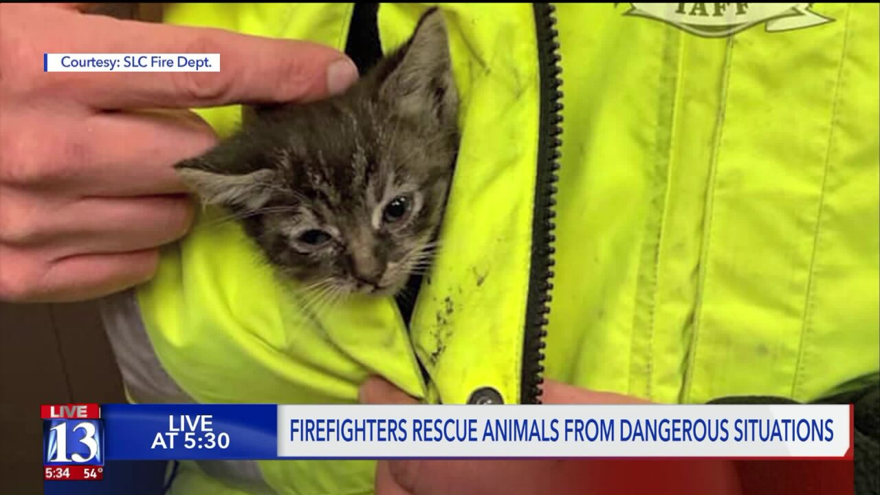Firefighters rescuing more animals from dangerous situations
