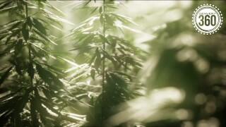 marijuana delivery 360.jpg