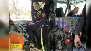 Colorado Springs Fire Department rescue two puppies