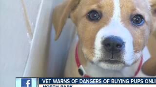 Veterinarians warn public of dangers of buying puppies online