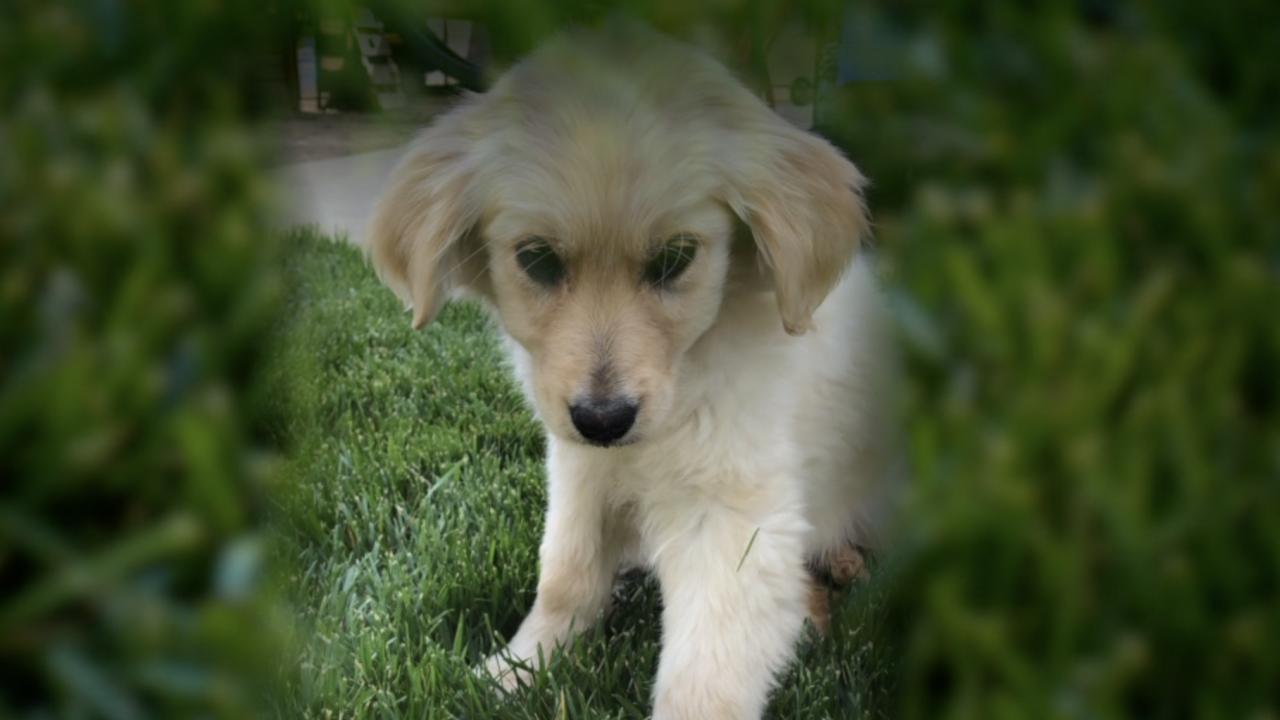 puppy sales