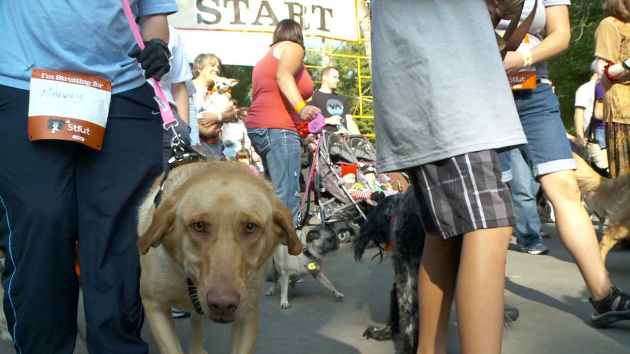 Humans, dogs head to Liberty Park to 'Strut Your Mutt'