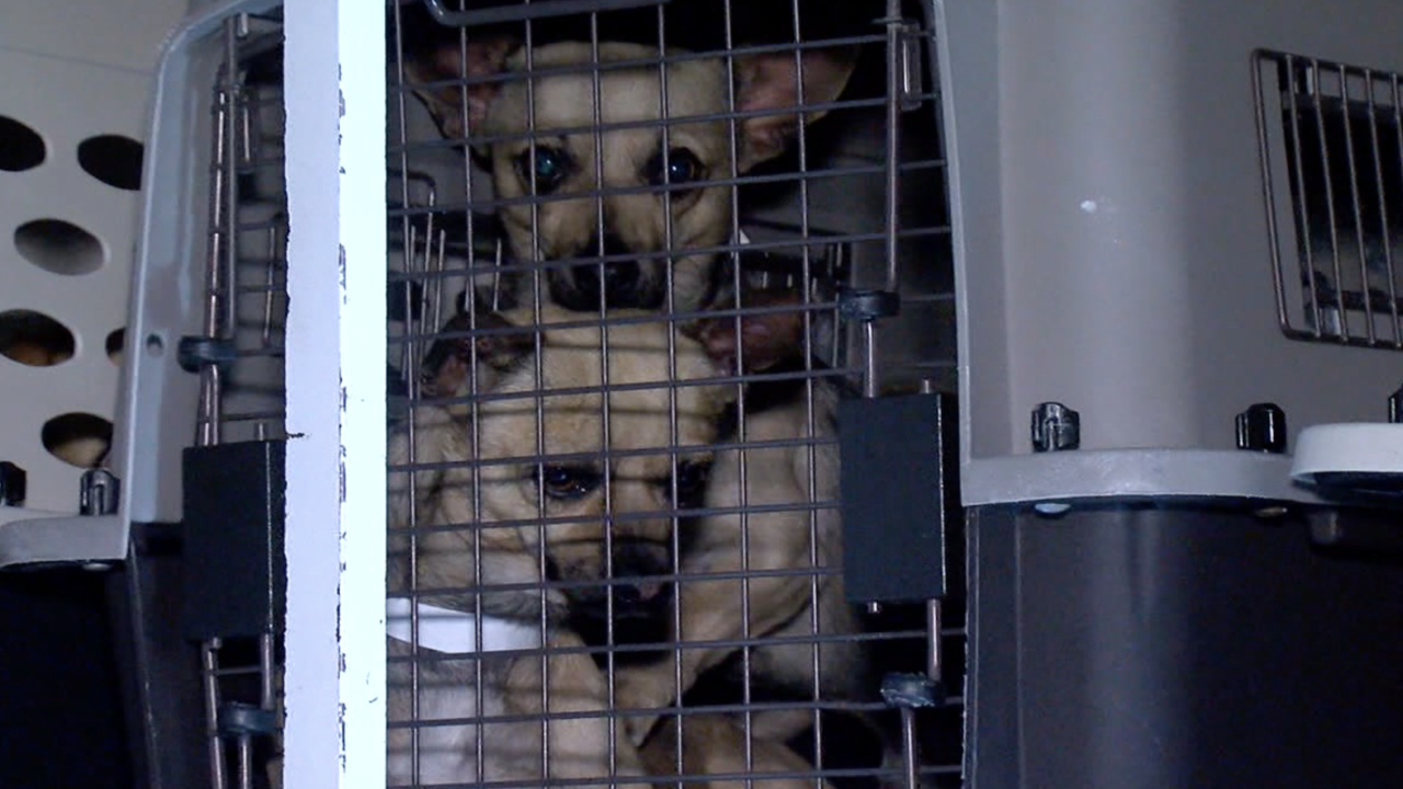 MCACC dogs shipped out of state