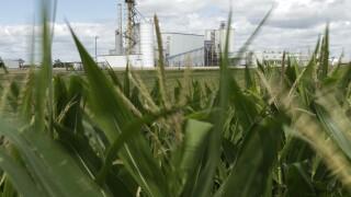 Biofuel Future