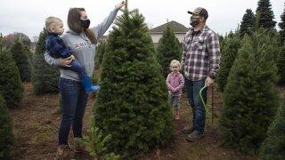 christmas tree real.jpeg