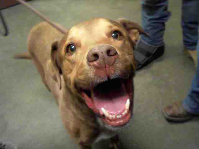 Adoptable pets up for adoption from Arizona Humane and Maricopa County Animal Care (12/11)