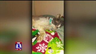 PETA billboard warns owners to keep catsinside