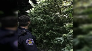 Illegal grow bust in Pueblo County.jpg