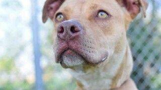 Waco animal shelter reaches 'no kill' status